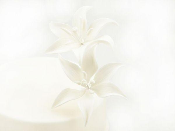 Zuckerblüte Tiger-Lilie 2er