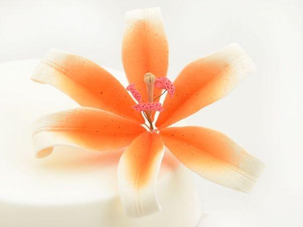 Zuckerblüte Lilie weiß orange