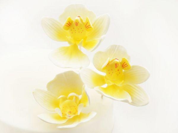Zuckerblüte Schmetterlings Orchidee 3er