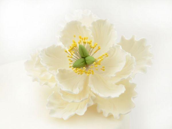 Zuckerblüte Pfingstrose weiß
