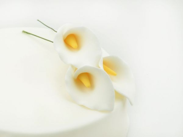 Zuckerblüte Calla 3er