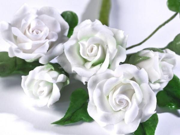 Blütenpaste Renshaw 250gr