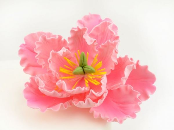 Zuckerblüte Pfingstrose pink